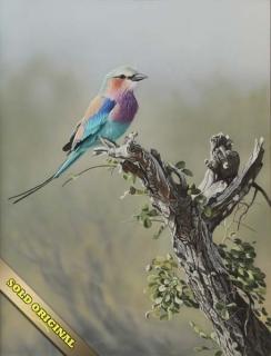 African Beauty - Blue Roller