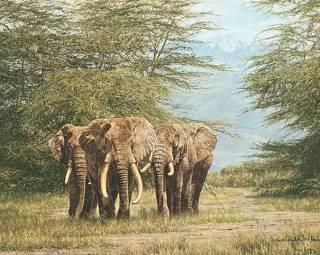 Amboseli Ancients