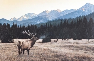 Autumn Medow - Elk