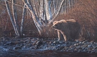 Autumn Morning - Grizzly