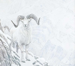 White World - Dall's Sheep