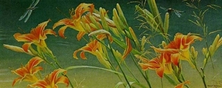 Day Lilies and Dragonflies