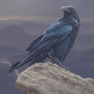 Canyon Vista - Raven