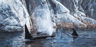 Deep Water - Orcas