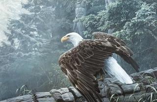 Fallen Totem - Bald Eagle
