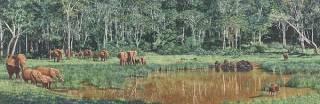 Forest Waterhole