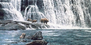 Grizzlies at the Falls