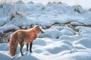 Icy Morning - Red Fox