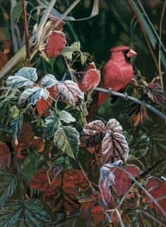 Frost Fire - Cardinal