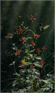 Grace Notes - Ruby-Throated Hummingbird