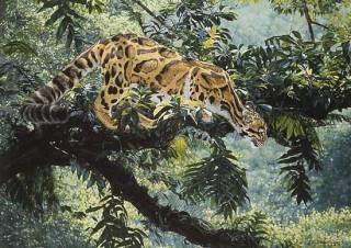 Jungle Phatom