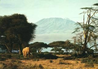 Kilimanjaro  Mornimg