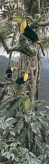 Los Colores De Chiapas