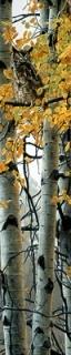 TreeTop Flier