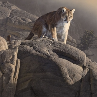 On The Edge  - Cougar