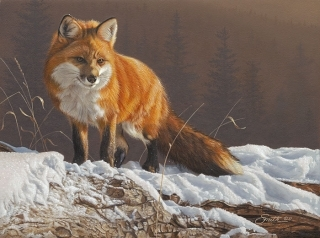 Radiant  -  Red Fox
