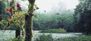 Rain Forest Rendezvous
