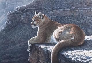 Rimrock  Cougar