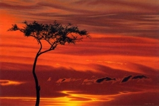 Acacia Sunset-Serengeti