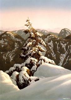 Pine Summit