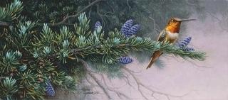 Rufus Hummingbird and Mountain Hemlock