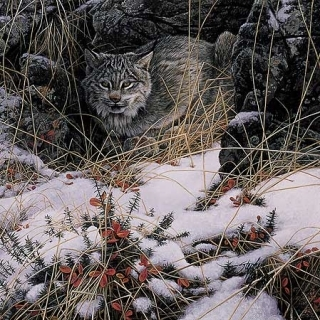 Secret Watch (Lynx)