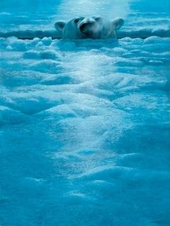 Polar Lookout