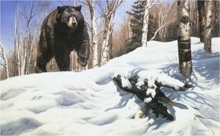 Breaking Cover - Black Bear