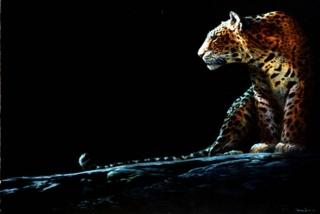 Full Moon Rising - Leopard