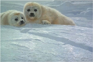 Ice Companions - Harp Seal Pups