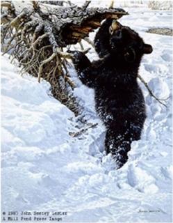 In Deep - Black Bear Cub