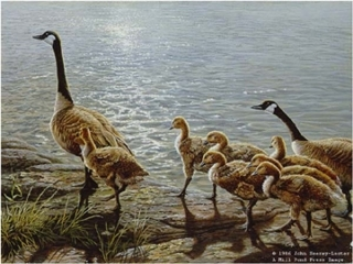 Lakeside Family - Canada Geese