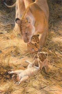 Marsh Lions - A New Generation