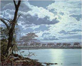 Night Moves - African Elephants