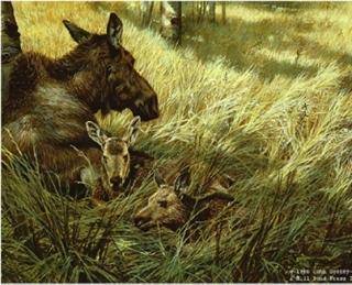 Northwoods Family - Moose