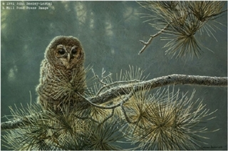 Out on a Limb - Young Barred Owl