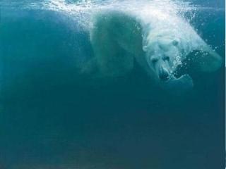 Polar Impact