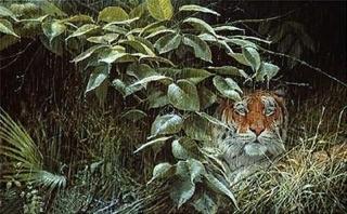 Rains - Tiger