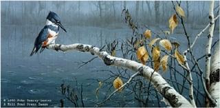Rain Watch - Belted Kingfisher