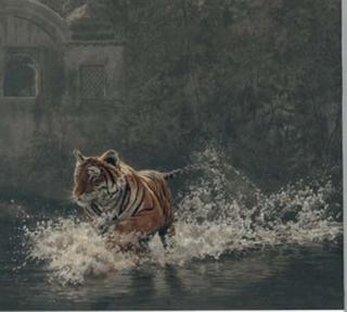 Rajbagh Run - Tiger