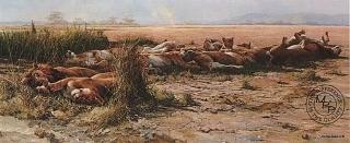 Savanna Siesta - African Lions