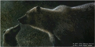 Seeking Attention - Grizzly