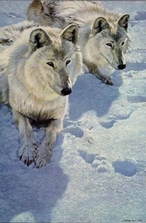 Sisters - Arctic Wolves