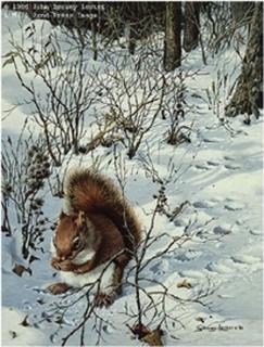 Snowy Excursion - Red Squirrel