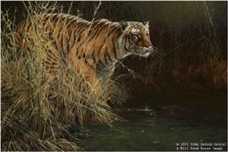 Something Stirred - Bengal Tiger
