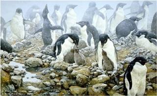Spring Flurry - Adelie Penguins