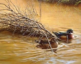 Sundown Reflections - Wood Ducks