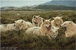 Tundra Family - Arctic Wolves