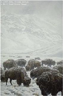 Winter Grazing - Bison