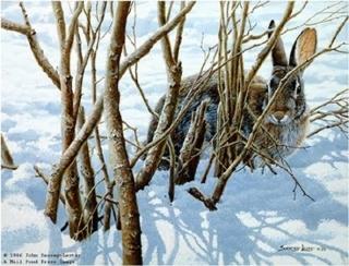 Winter Hiding - Cottontail